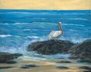 Pelican on Rock